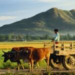 Trung Quốc: Gần một nửa nông dân bị thu hồi đất