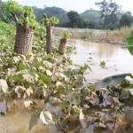 Đất ven sông khai hoang có được bồi thường khi bị thu hồi?