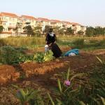BĐS phía Tây Hà Nội: Doanh nghiệp đầu tư hạ tầng dự án để hút khách