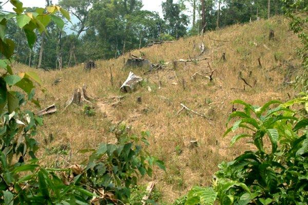 20150623133605 7791 Quảng Nam thu hồi hơn 1000ha đất rừng cho công ty Đài Loan thuê