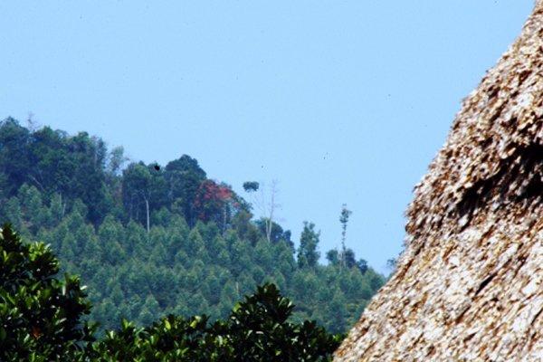 20150623133605 f1c4 Quảng Nam thu hồi hơn 1000ha đất rừng cho công ty Đài Loan thuê