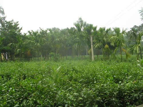 20151121111440 4996 Hà Nội đã phê duyệt giá khởi điểm để đấu giá quyền sử dụng 4 khu đất tại Ba Vì